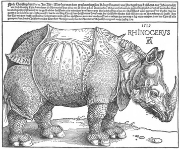 Drawing of Rhino by Durur
